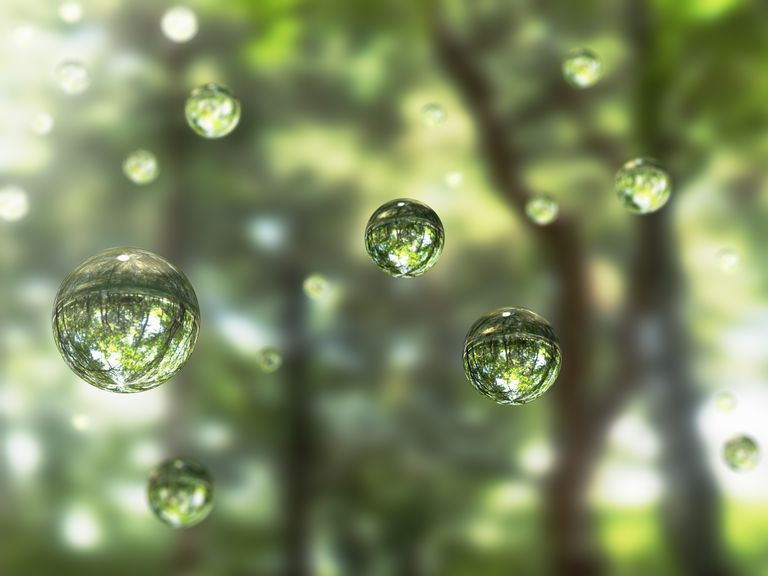 Water drops in the forest : Stock Photo Embed Share Comp Add to Board Water drops in the forest