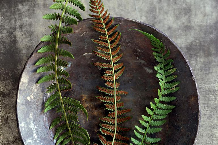Fern fronds in bowl