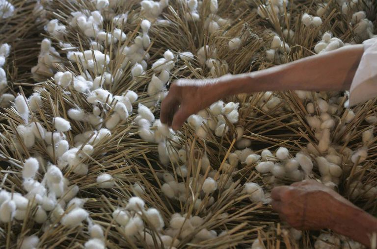 A worker picks silkworm cocoons at a silk workshop