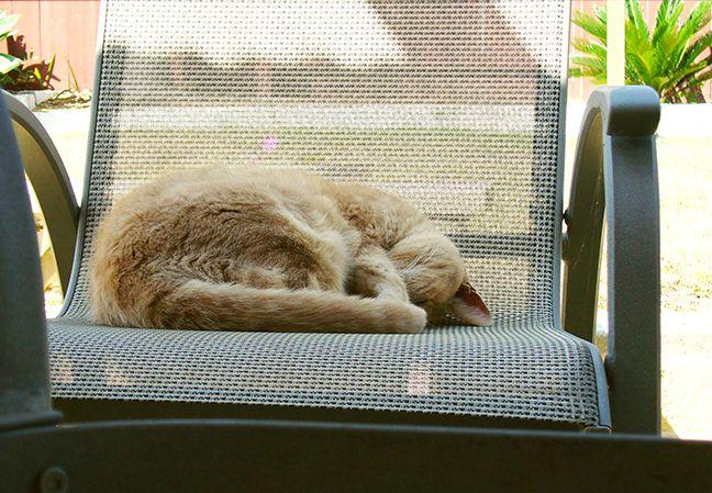 gato-senior_incontinencia.jpg