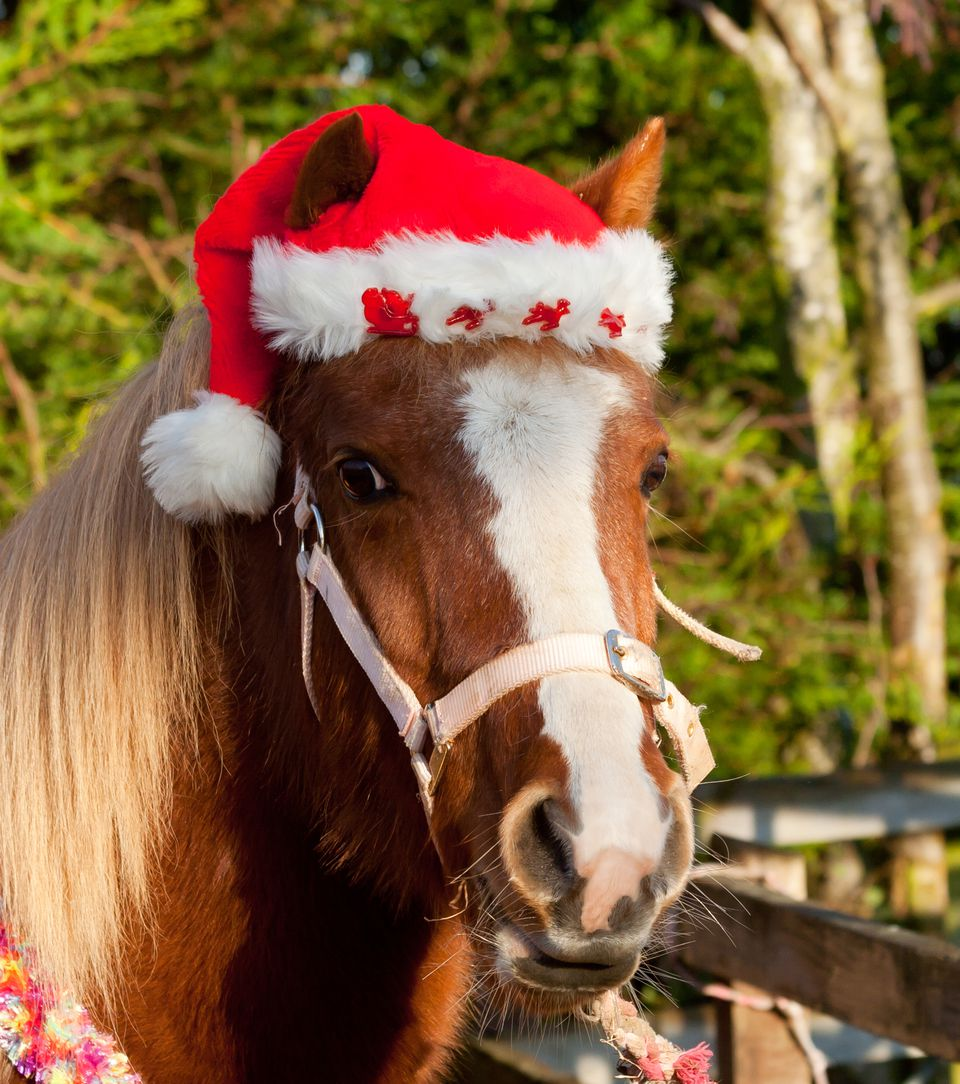 Pretty pony in Santa hat for Christmas