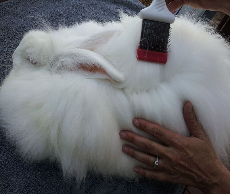 Angora rabbit wool rusticzcountrysstylexhomedecor.tk can be made into a range of products including toys, hats, gloves, insoles, booties, shawls, scarfs and so much more, below is a selection of products I have used angora wool in.