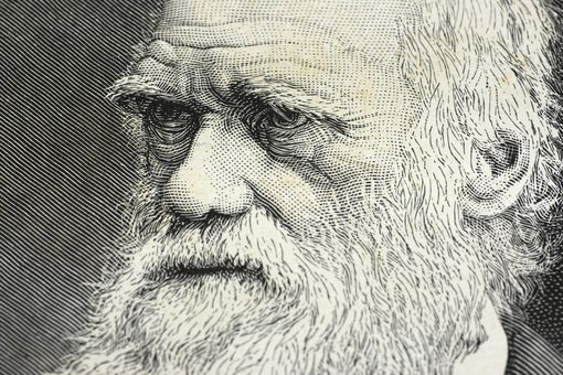 Illustration showing Charles Darwin