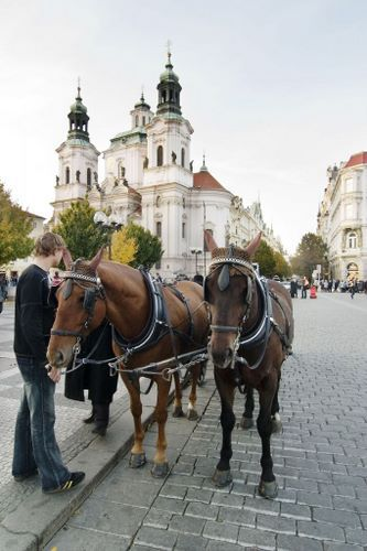 Horse Drawn Carriage Prague