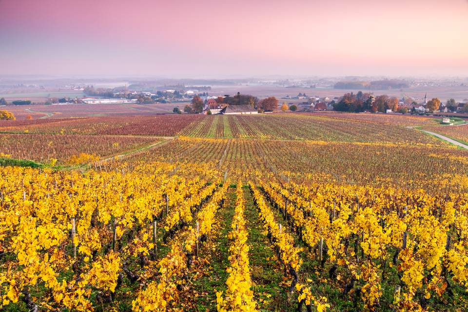 Beaune And The Burgundy Wine Region Of France