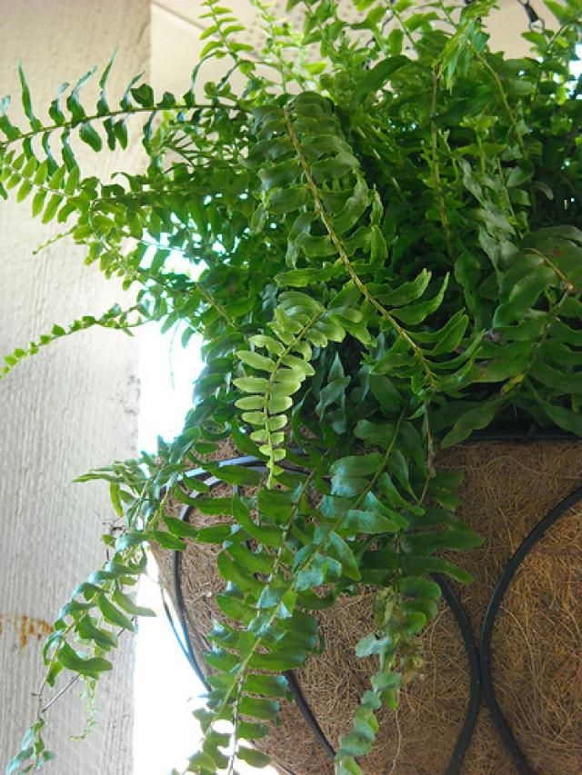 Plants That Are Safe For Pet Birds