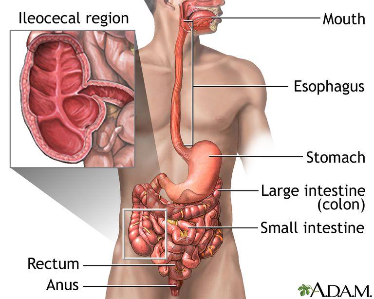 Inflammatory Bowel Disease Ibd Signs And Symptoms