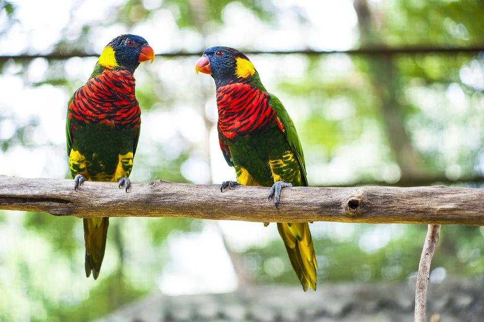 Parrots at the KL Bird Park