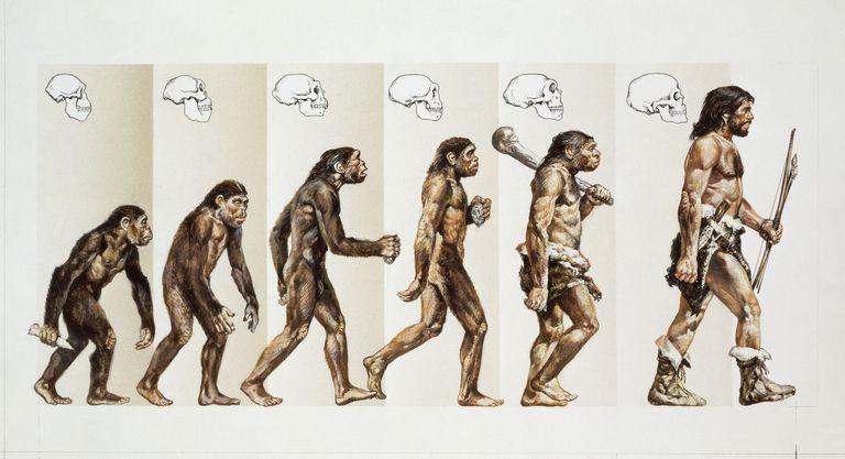 Macroevolution of Hominids