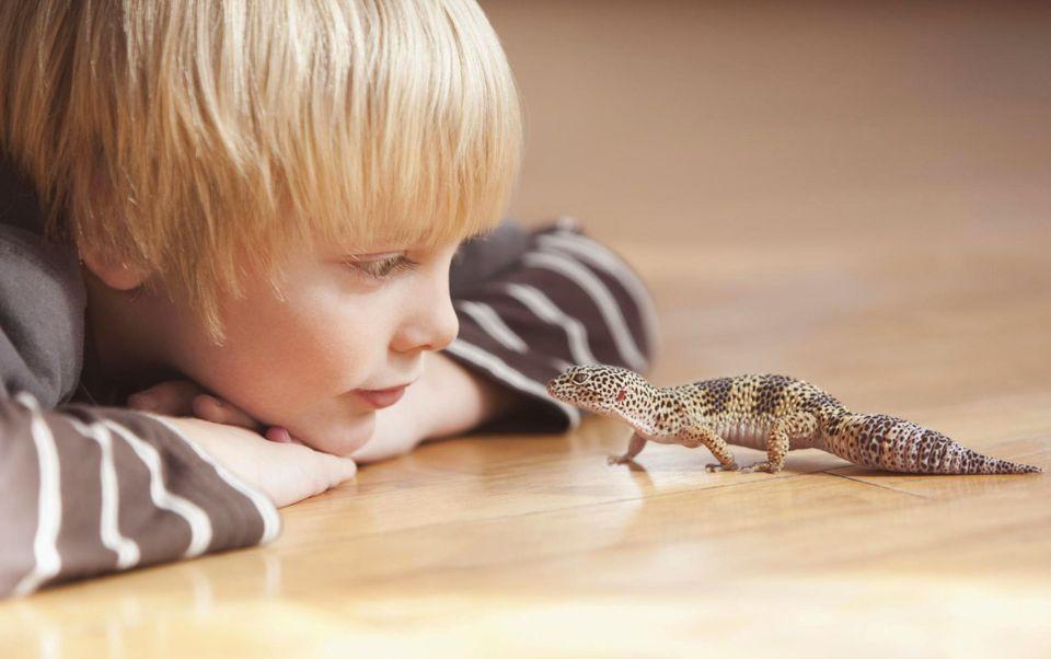 Boy with leopard gecko