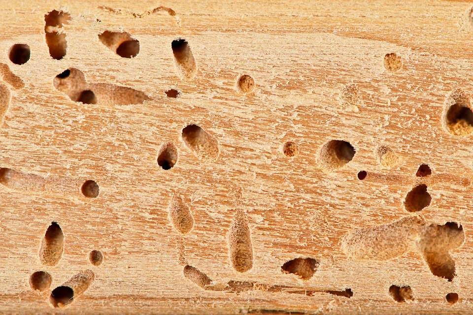 Termite holes close up
