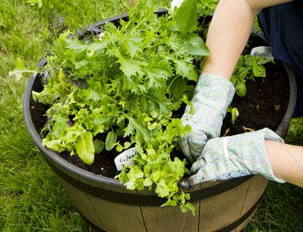 Vegetable container gardening basics how to get started growing vegetables in pots workwithnaturefo
