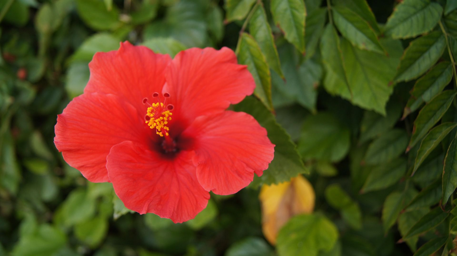 Include red flowers in your plant selection izmirmasajfo Gallery