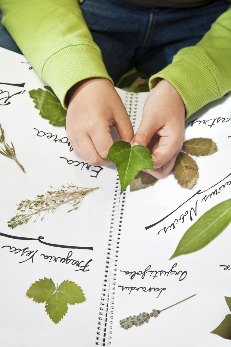 Children hands and herbarium.