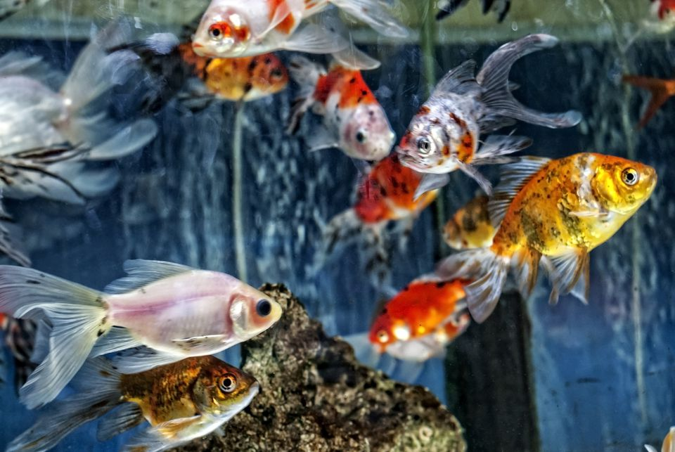 Aquarium fish on display