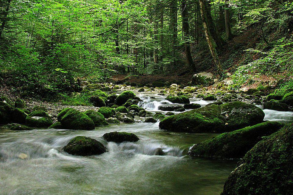 Forest Riparian Habitat
