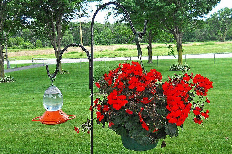 Hummingbird Feeder and Hanging Flowers