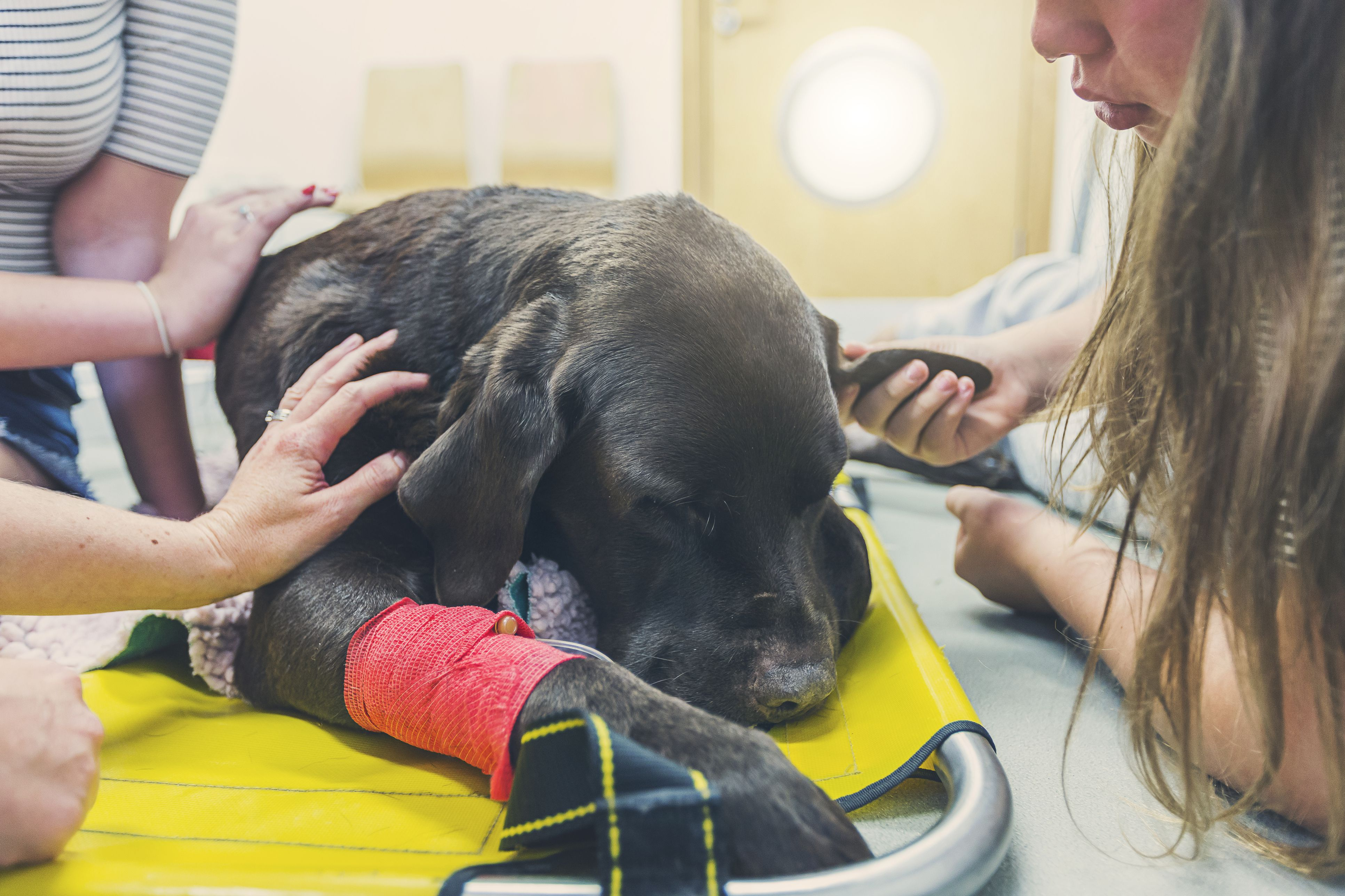 An Overview Of Signs Of Cancer In Dogs