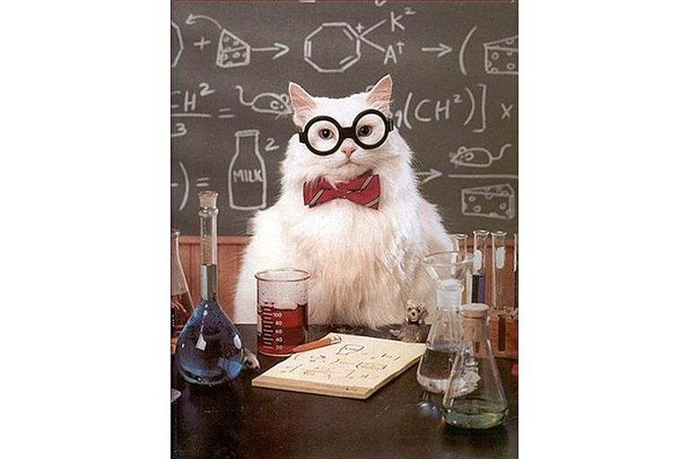 Chemistry cat is speechless.