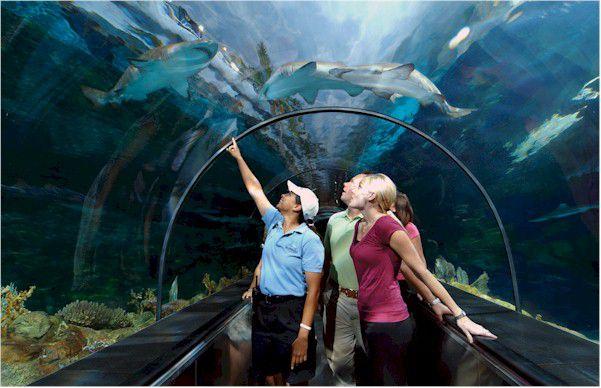 Seaworld Orlando Vacation Planning Guide