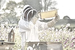 Beekeeper checking honey on beehive frame in field full of flowers