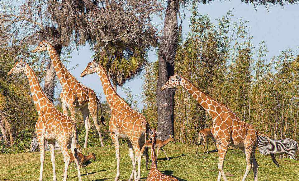 Busch Garden's Serengeti Plain