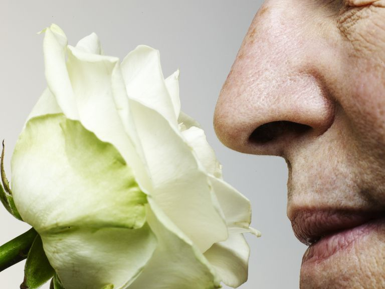 The Sense of Smell Could Be Related to Alzheimer's Disease