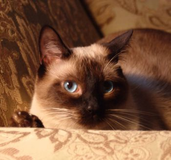 Declawing Cats Humane Alternatives To Declawing