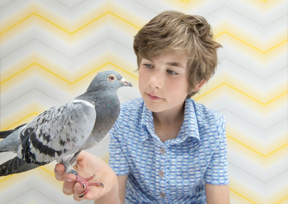 Pigeon in boy's hand with Chevron striped background