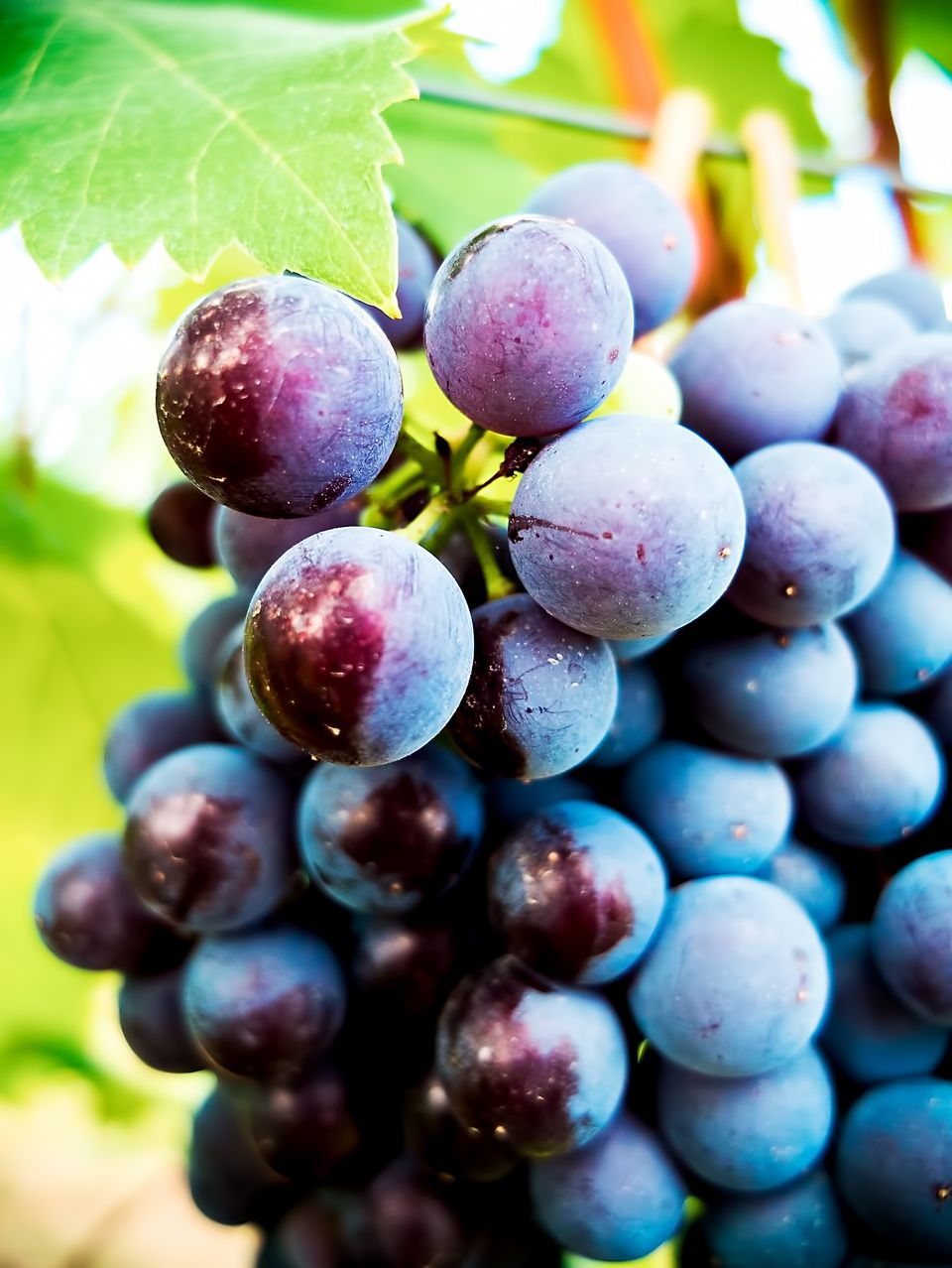 Close-Up Of Ripe Grapes