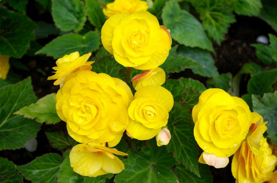 Common Yellow Garden Flowers 10 best flowers to use in hanging baskets