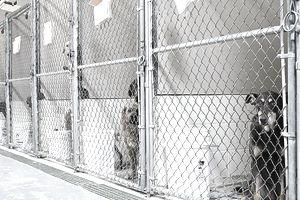 Dogs Awaiting Adoption