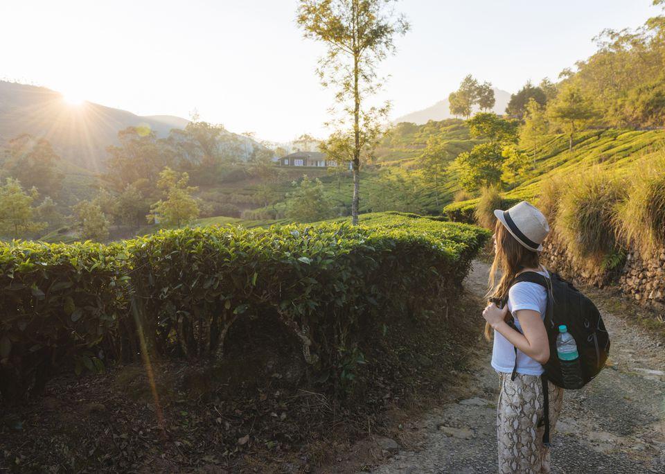 Young woman looking out at tea plantations near Munnar at sunset, Kerala.