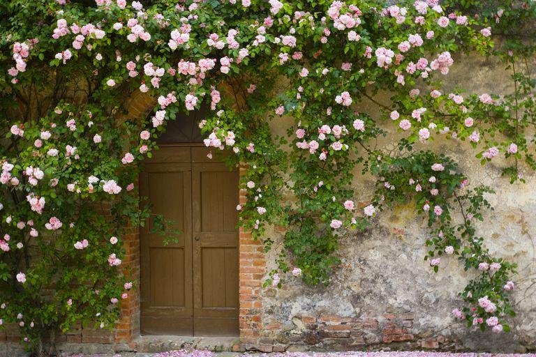 7 tipos de plantas indispensables en el jard n for Plantas trepadoras de jardin
