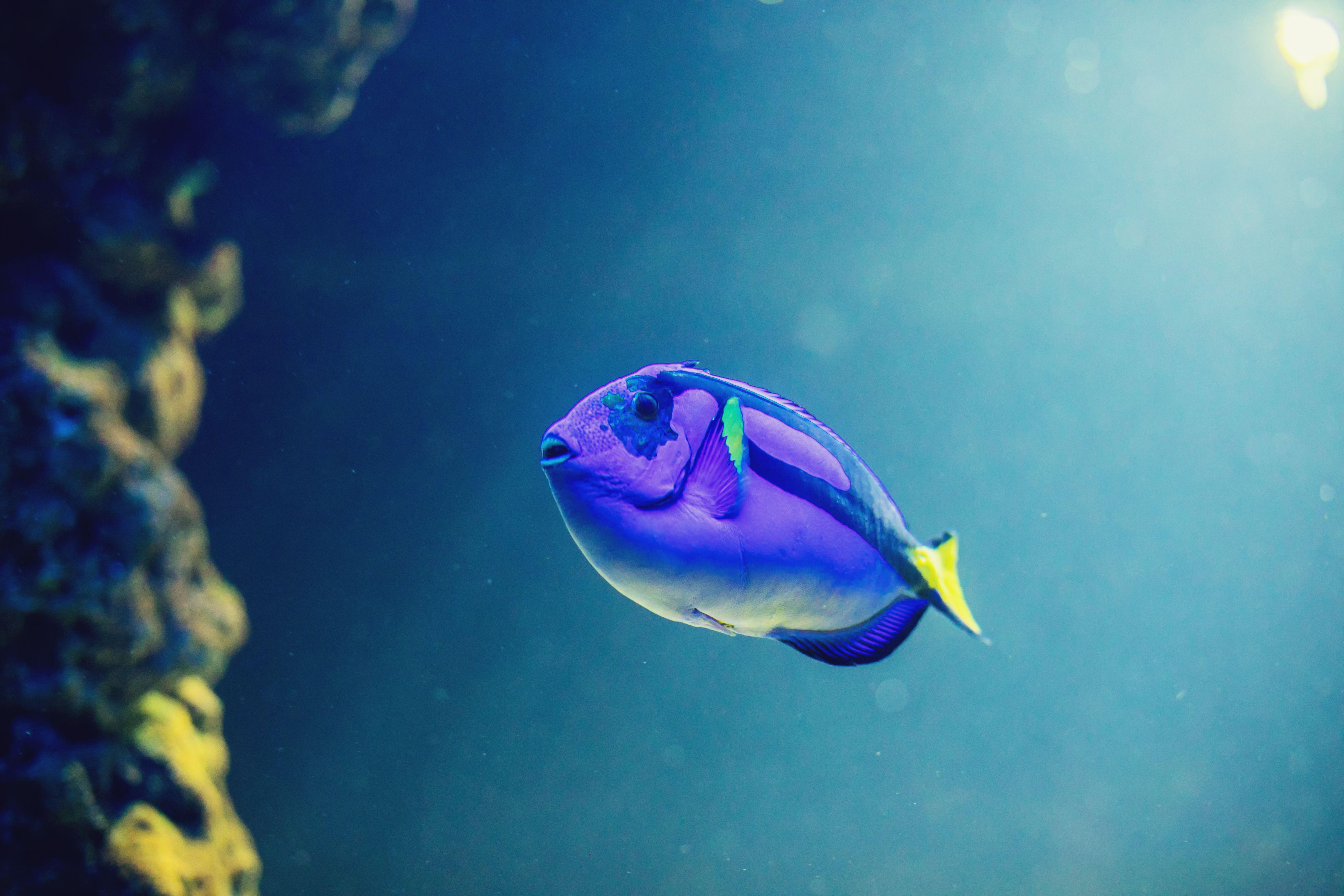 Saltwater Aquarium Fish Disease Diagnostic Tool