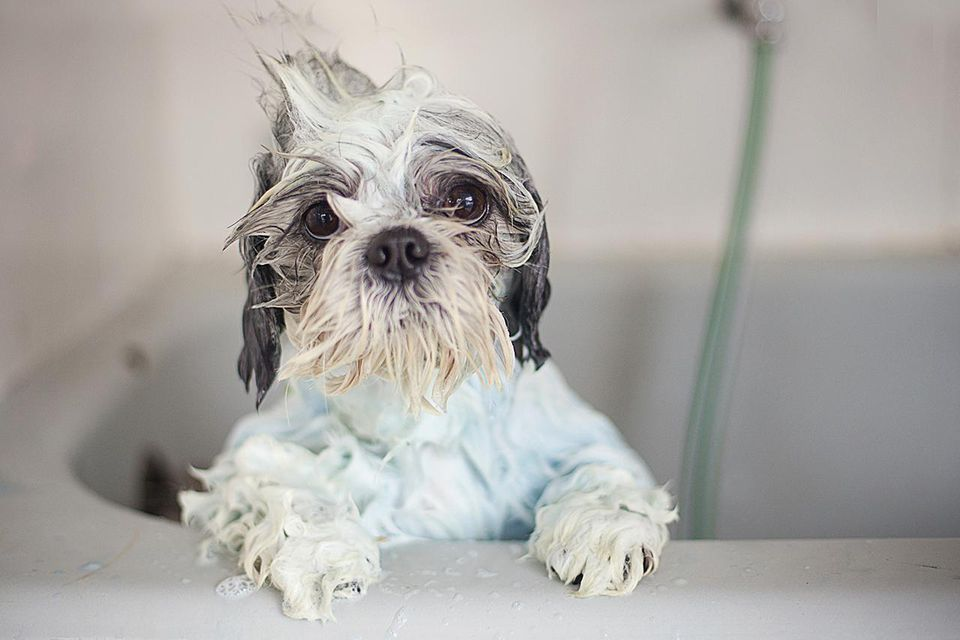 dog,bath time