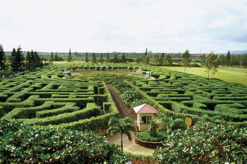 Dole Plantation Garden Maze
