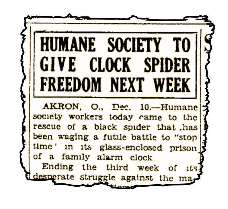clock spider freedom