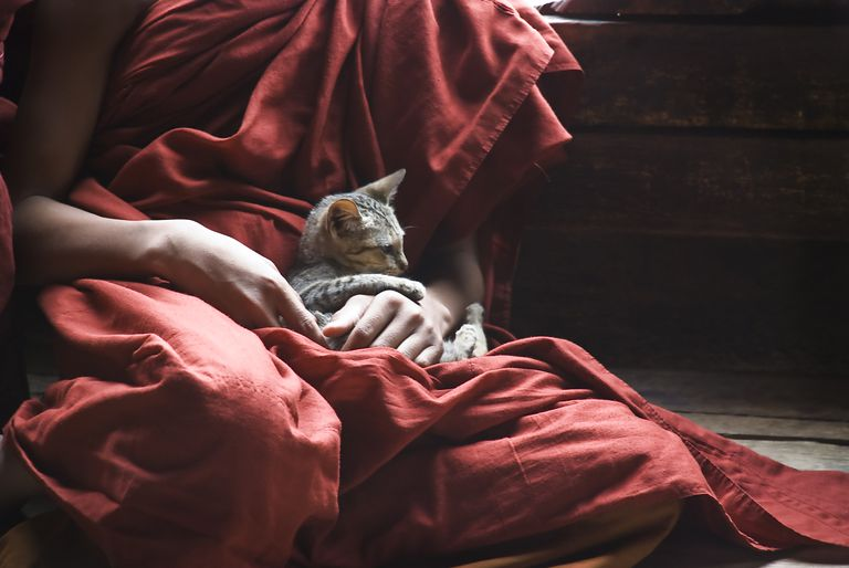 Buddhist monk with kitten