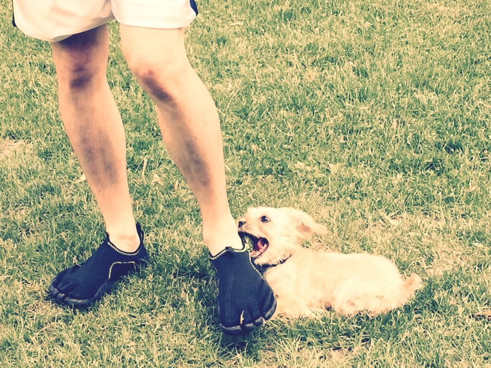 dog biting owner's ankle