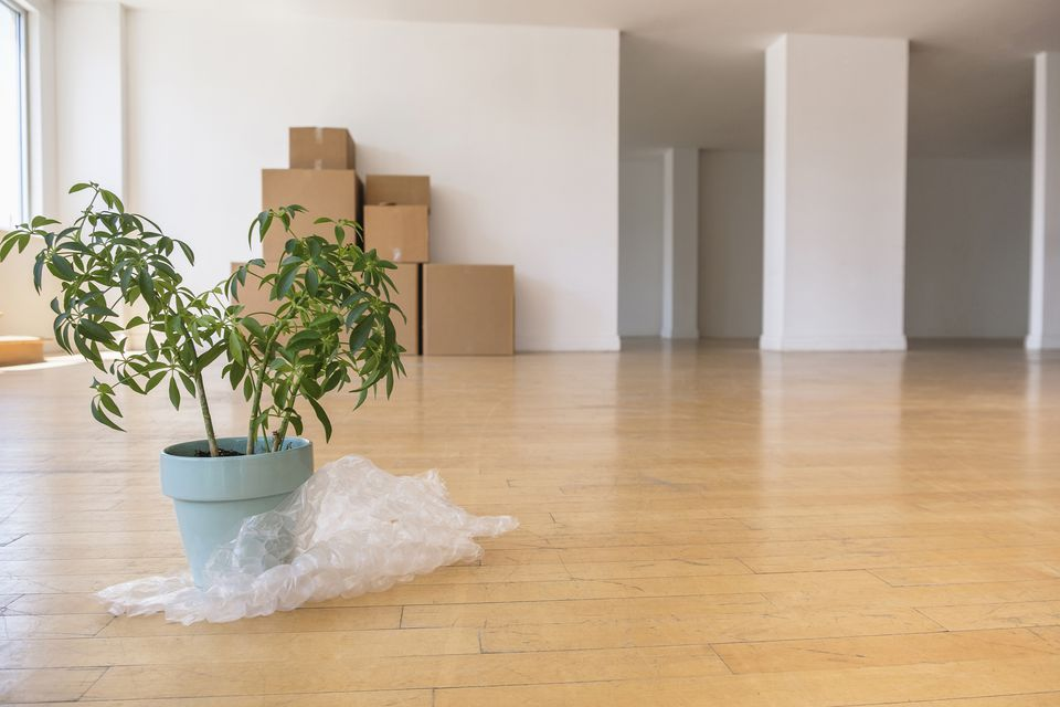 Potted plant on bubble wrap with cardboard boxes in empty apartment