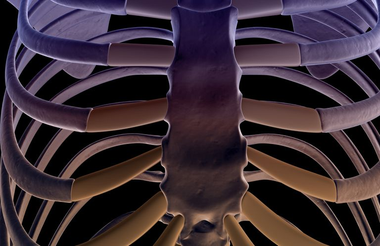 The bones of the sternum