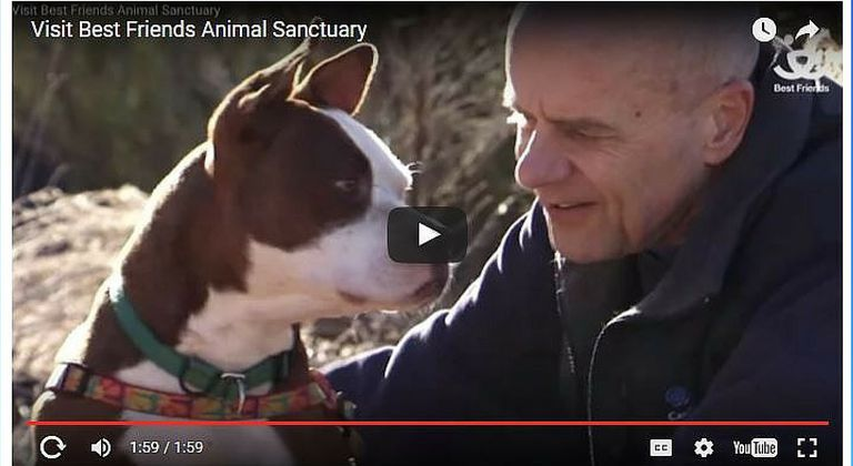 Video of dog and man at Best Friends Animal Sanctuary