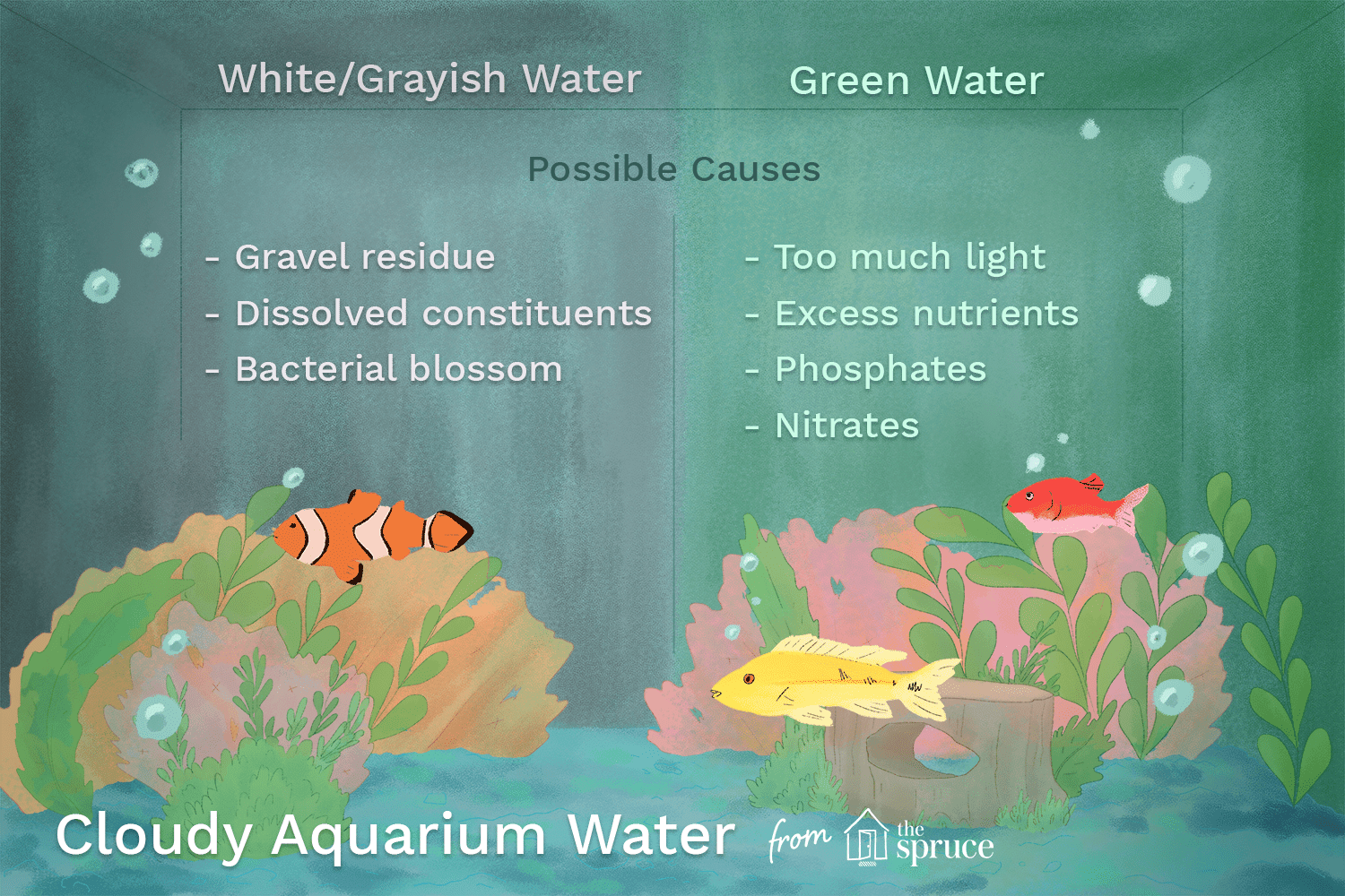 cloudy aquarium water causes and cures