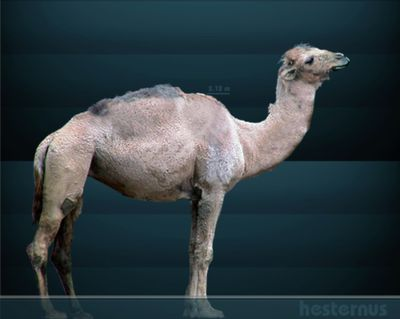 The Dinosaurs And Prehistoric Animals Of Tennessee