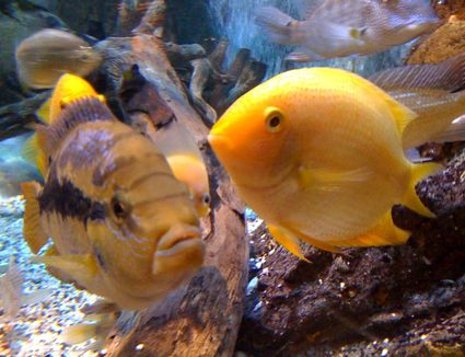 Causes And Fixes For Yellow Or Brown Aquarium Water