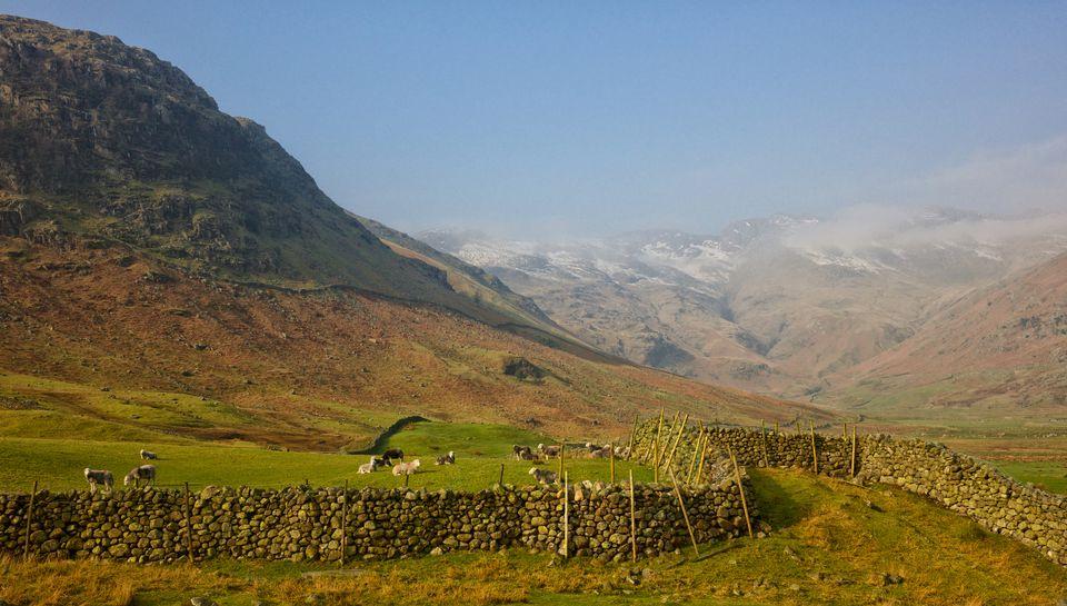 Sheep in English Lake District