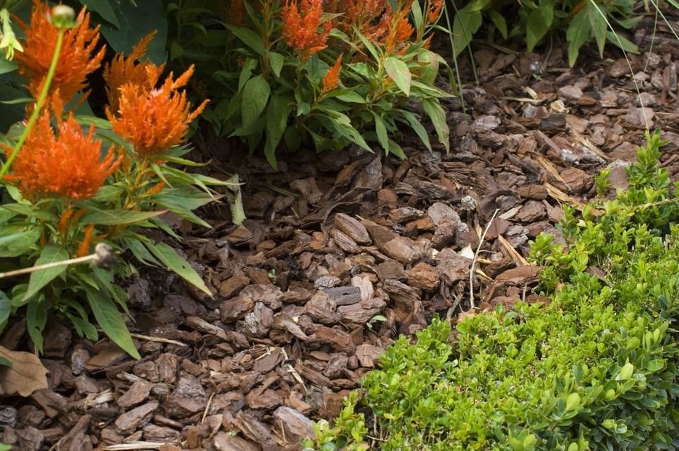 Mulch what it means how it 39 s used in landscaping for No maintenance flower bed