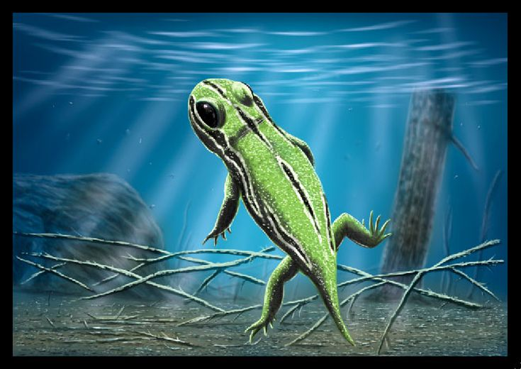 Prehistoric life during the devonian period when giant amphibians ruled the earth sciox Gallery