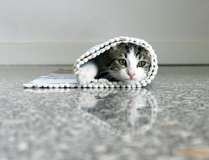 Things That Cats Like - 18 hilarious sad cat problems that might explain why your cats so moody